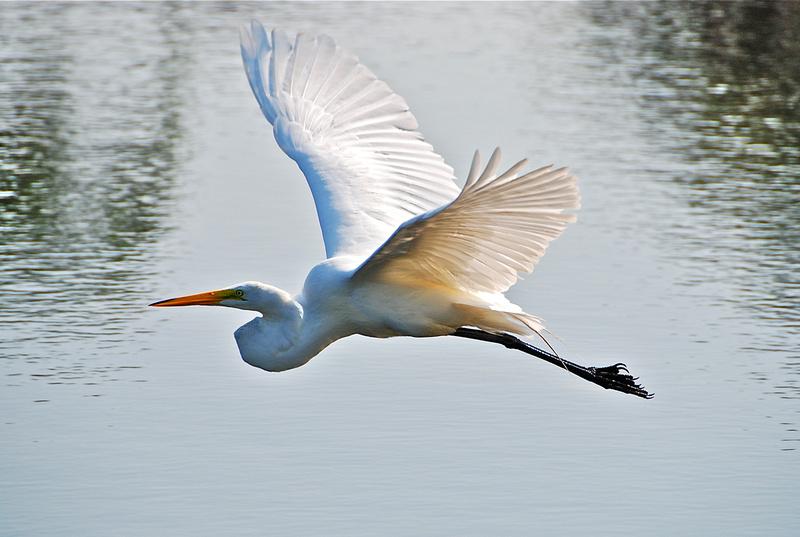 A Gift From A Great White Egret Lunasees Luna Jades Blog