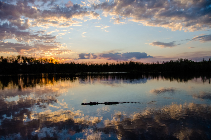 Gator in the Clouds... Luna Jade ~ BeautySuspended.com